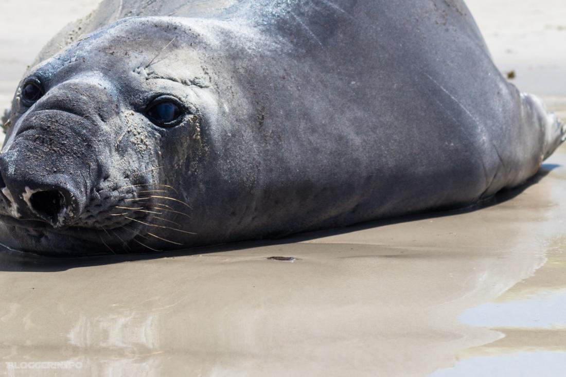 Bloggerinspo - Elephant seal cape town